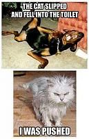 Click image for larger version.  Name:dogs-cats-pets.jpg Views:6 Size:27.7 KB ID:190