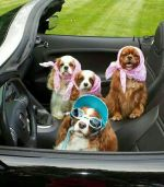 Click image for larger version.  Name:pets.jpg Views:2 Size:7.7 KB ID:343